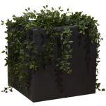 Enjolyplanter Velvet