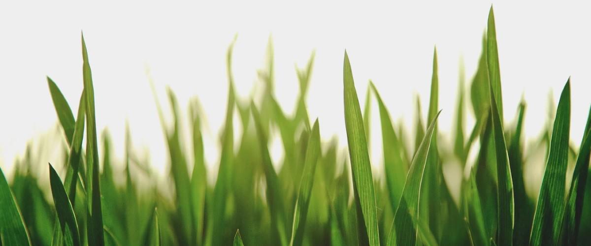 Herstel je gazon in het voorjaar, hier vind je allerlei handige tips
