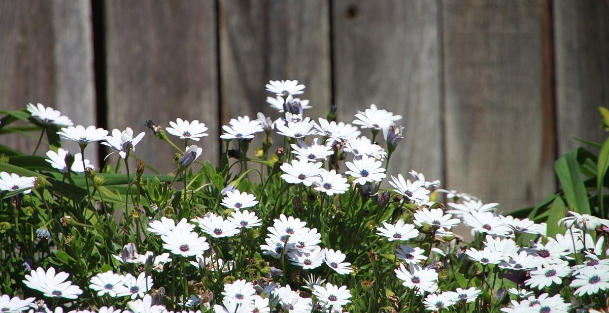 Kleine tuin inrichten lees het stappenplan for Tuin inrichten planten
